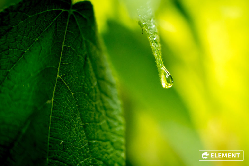 A water droplet on a leaf, captured by last years group.